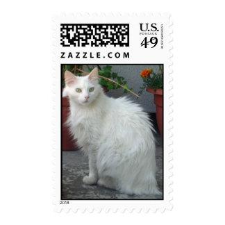 ANGORA CAT STAMP