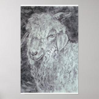 Angora goat print