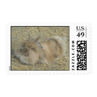 Angora rabbit postage