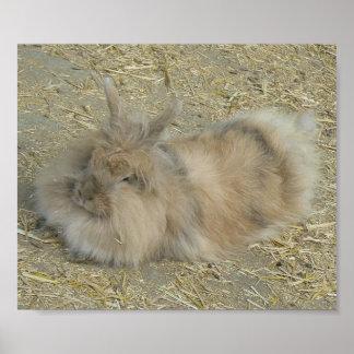 Angora rabbit print