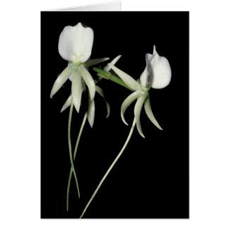 Angraecum eburneum card