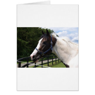 Angrove Rumbaba coloured racehorse Card