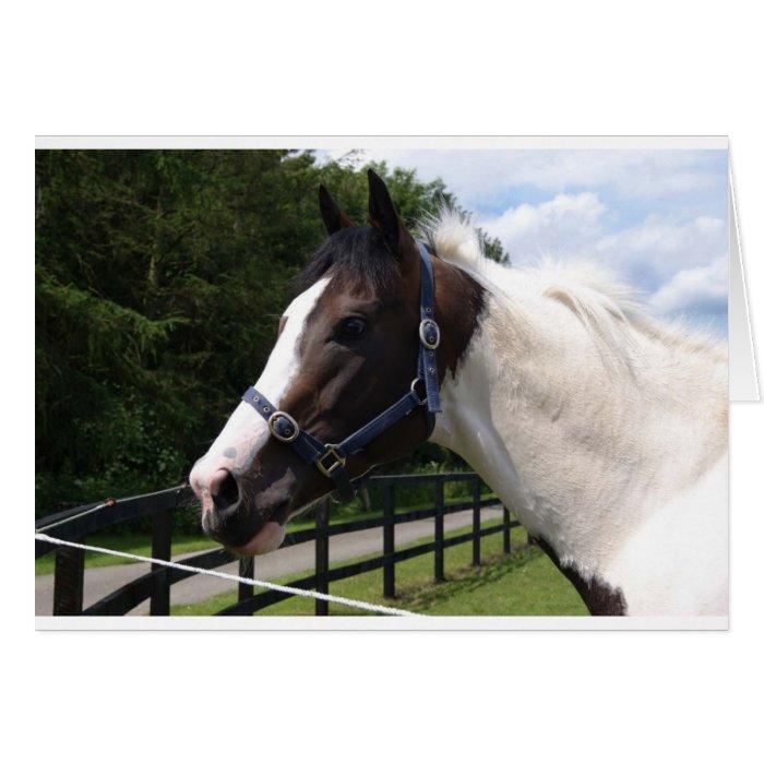 Angrove Rumbaba coloured racehorse Card
