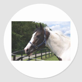 Angrove Rumbaba coloured racehorse Classic Round Sticker