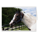 Angrove Rumbaba coloured racehorse Greeting Card
