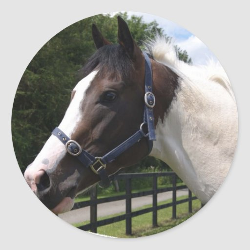 Angrove Rumbaba coloured racehorse Stickers