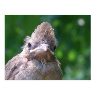 angry baby bird postcard