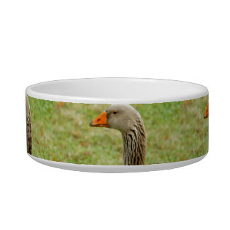 Angry Bird Pet Bowls