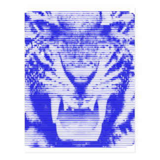 Angry Blue Tiger Horizontal Lines Postcard
