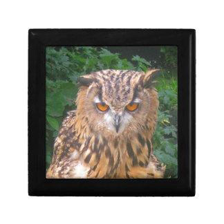 Angry Brown Owl Keepsake Boxes