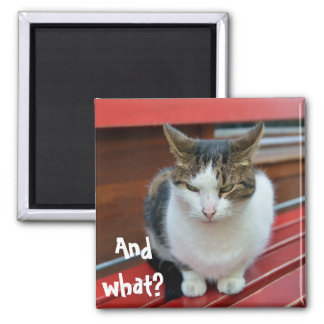 Angry cat 2 inch square magnet