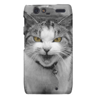 Angry Cat Droid RAZR Cover