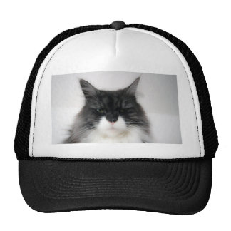 angry cat trucker hat
