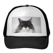 angry cat mesh hats