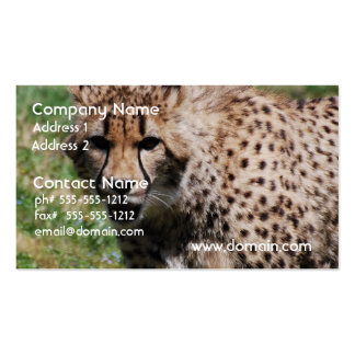 Angry Cheetah Double-Sided Standard Business Cards (Pack Of 100)