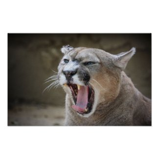 Angry Cougar Print