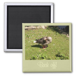 Angry Goose Back Off Magnet