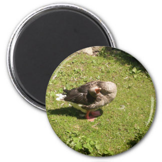 Angry Goose Magnet