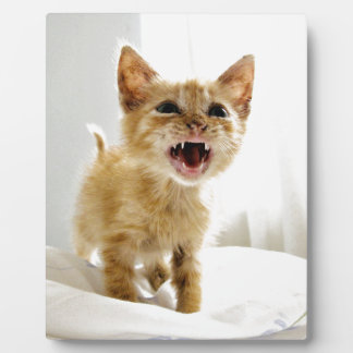 Angry Kitten Plaque