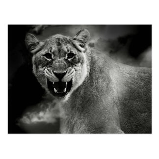 Angry lion in black and white postcard