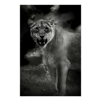 Angry lion in black and white poster