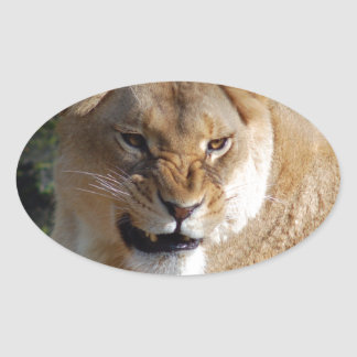 Angry Lioness Oval Sticker