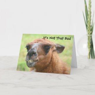 Angry Llama Humorous 50th Birthday Card