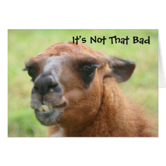 Angry Llama Humorous 50th Birthday Card