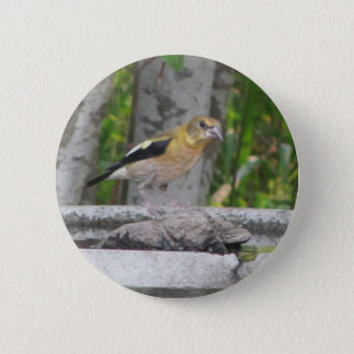 Angry Looking Bird Button
