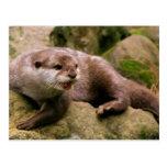 Angry Otter Postcard