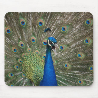 Angry Peacock! Mouse Pad