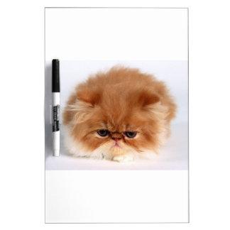 Angry Persian Puff Ball Kitten Dry-Erase Board