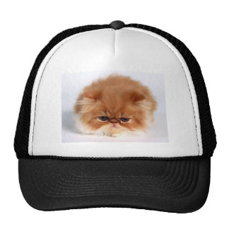 Angry Persian Puff Ball Kitten Mesh Hat