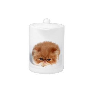 Angry Persian Puff Ball Kitten