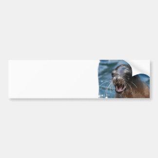 Angry Sea Lion Bumper Sticker Car Bumper Sticker