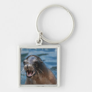 Angry Sea Lion Keychain