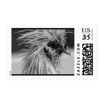 Angry Wet Silkie Chicken Postage