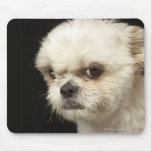 Angry white Shih Tzu with brown eyes Mouse Pad