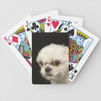 Angry white Shih Tzu with brown eyes Deck Of Cards