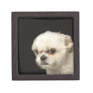 Angry white Shih Tzu with brown eyes Premium Jewelry Boxes