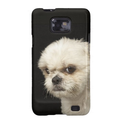 Angry white Shih Tzu with brown eyes Samsung Galaxy SII Cases