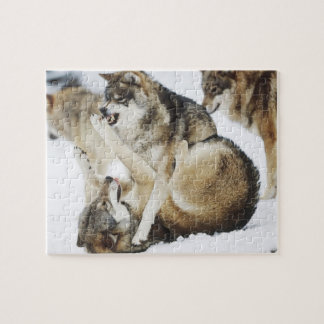 Angry Wolf Puzzle