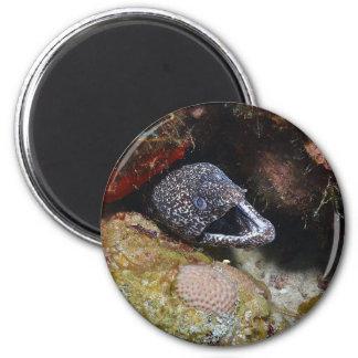Anguila acogedora imán redondo 5 cm