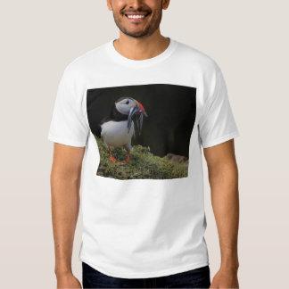 Anguila de arena y camiseta del frailecillo playera