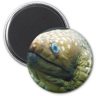 Anguila de Moray manchada Imán Redondo 5 Cm