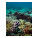 Anguila de moray manchada negro