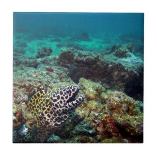 Anguila de moray manchada negro azulejo cuadrado pequeño