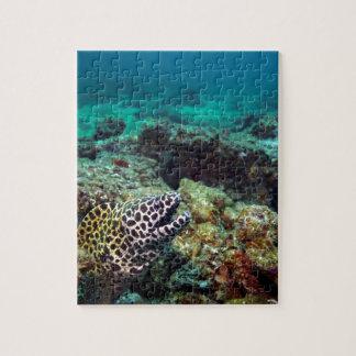Anguila de moray manchada negro puzzle