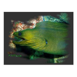 Anguila de Moray verde de Famouse Tarjeta Postal