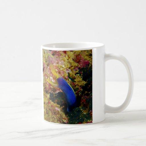 Anguila de Rhinomuraena Quaesita Bernis de la Taza Clásica